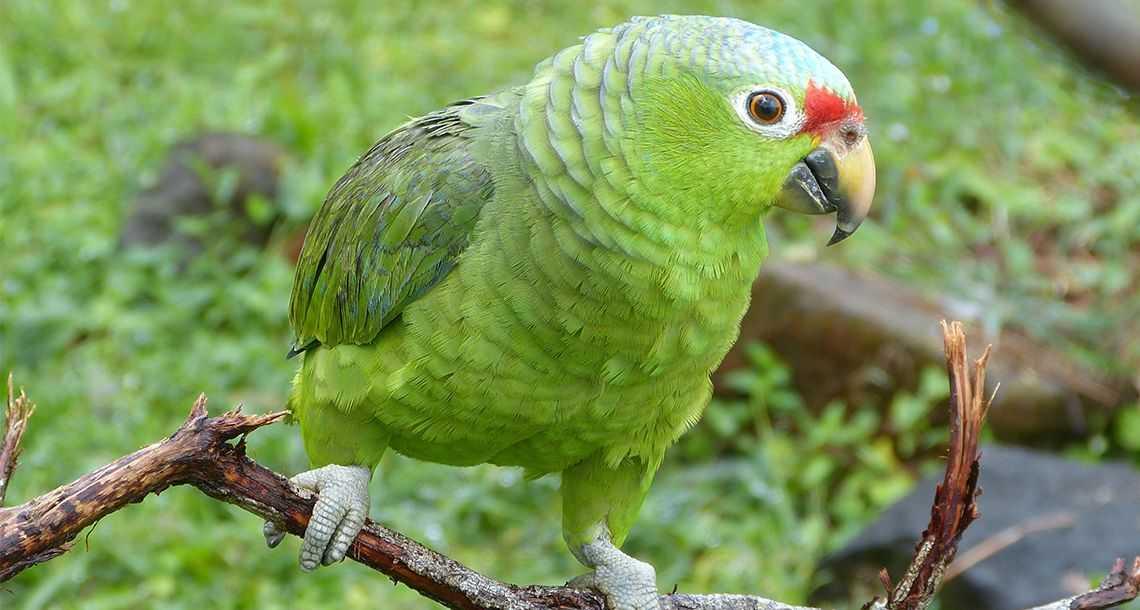 Observer les oiseaux au Celeste Moutain Lodge